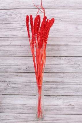 Сетария (10 шт. в букете), цв. красный 0364Н. 65см.