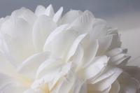 шар-цветок большой d=20см белый 8290