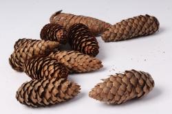 Шишки еловые натуральные (10 шт в уп)