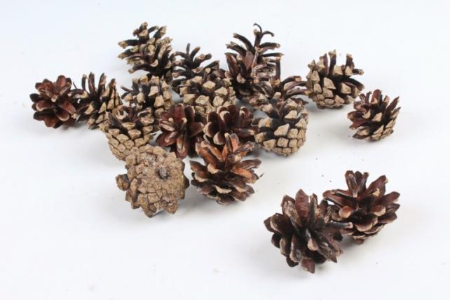 Шишки сосновые мелкие натуральные (20шт в уп )