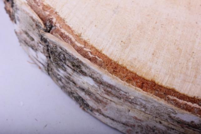 спилы березовые 25 см (1шт в сетке)