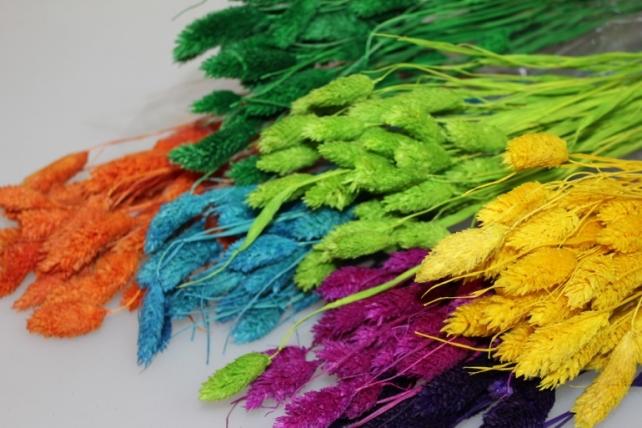 сухоцветы лагурус 50гр сухоцветы лагурус 50гр - бирюзовый 7317