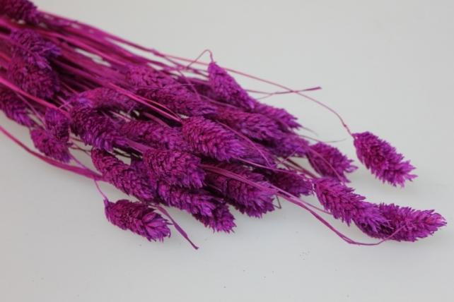 сухоцветы лагурус 50гр сухоцветы лагурус 50гр - малиновый 7317