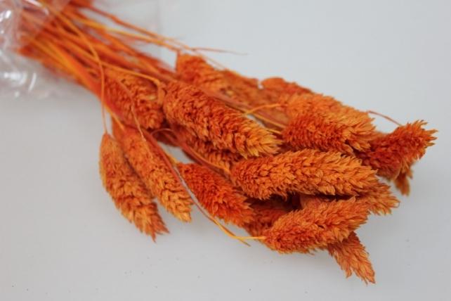 сухоцветы лагурус 50гр сухоцветы лагурус 50гр - оранжевый 7317