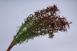 трава коричнево-зеленая 40 см