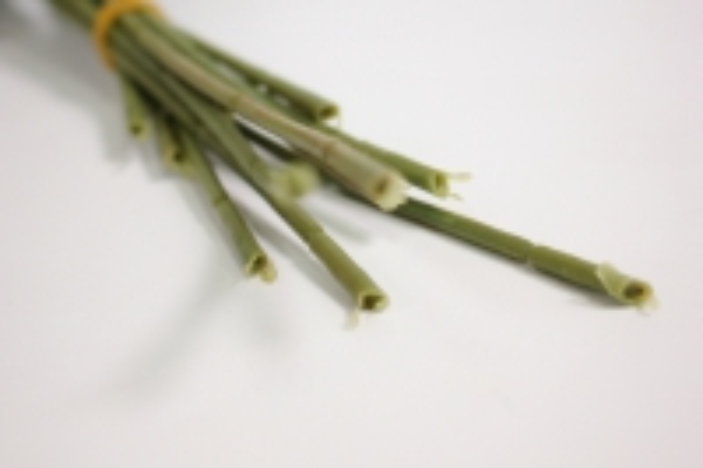 ветка розы 35 см, салатовая (12шт в уп) sun452