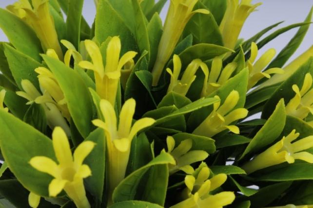 веточка с желтыми цветочками  25см (10шт в уп)  ava163e  8475