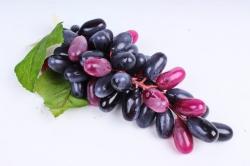 Виноград Гигант бургундия
