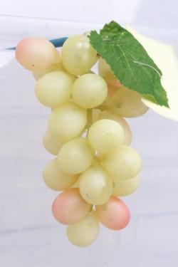 Виноград Изабелла желтый 1.1. 11см.