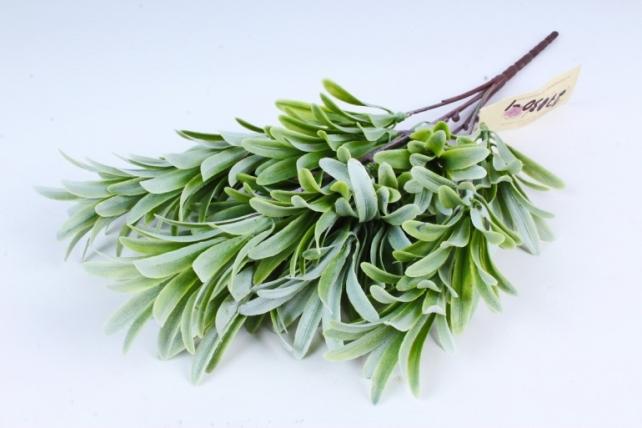 Зелень Лаванды бело-зелёная  AVA202-1
